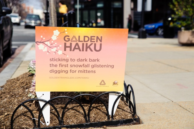 Golden Triangle haiku2 dark bark
